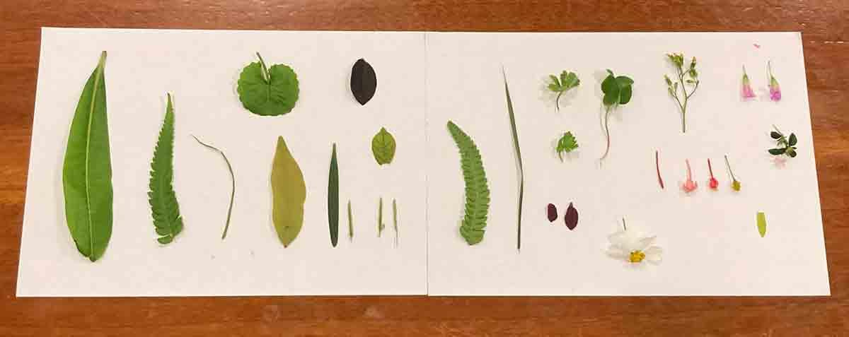 科普學習+美感教育:觀察公園裡的樹葉系列活動